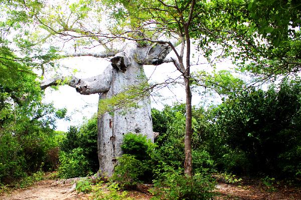 baobab montagne de francais