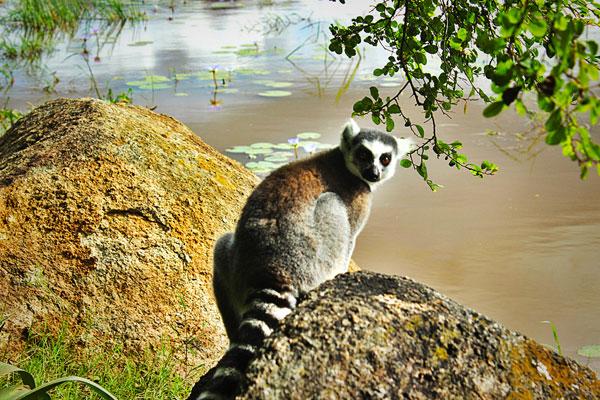 madagascar south tour lemur