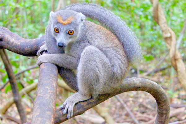 madagascar tours north