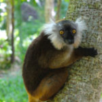 Excursion to the lemur's home in Nosy Komba Nosy Be Madagascar