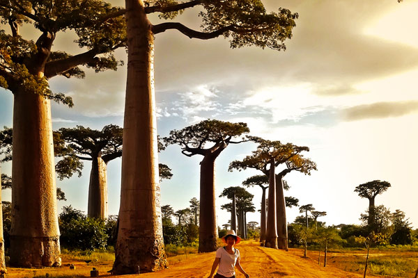 tours in madagascar baobab-alley