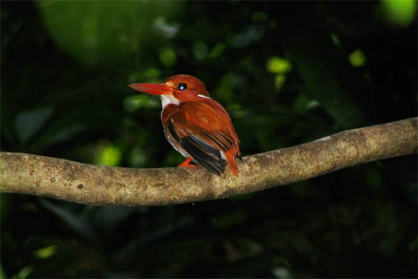 tours in madagascar north-birding