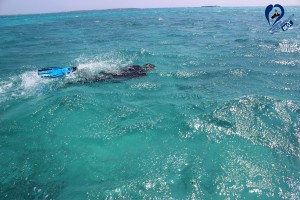 emerald sea 03
