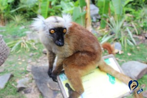 lemur-nosy-be-excursion
